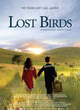 lost-birds